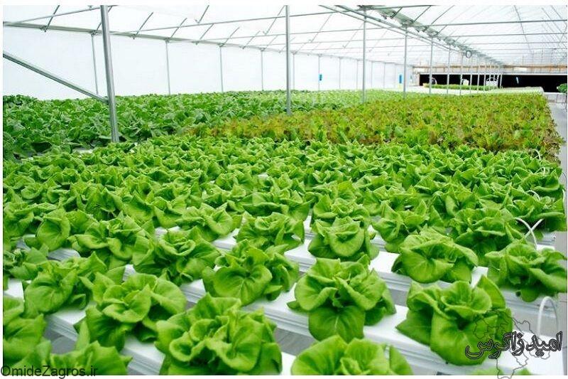 دوره آموزشی کشت گیاه بدون خاک در یاسوج برگزار می شود
