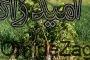 قلع و قمع درختان ثمری توسط افراد ناشناس در دیلگون بویراحمد